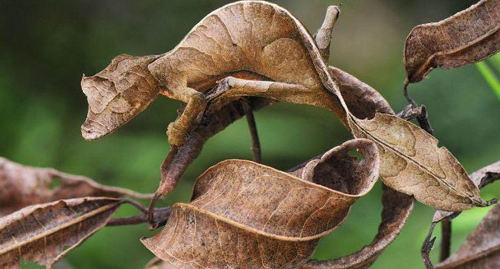 Reto: ¿eres capaz de encontrar a las lagartijas en medio de la naturaleza? | Foto: Referencial