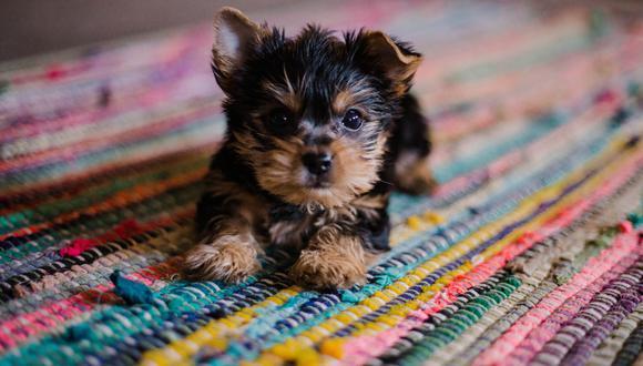 Educar a un cachorro puede durar meses. Lo importante es ser constante para ver resultados.