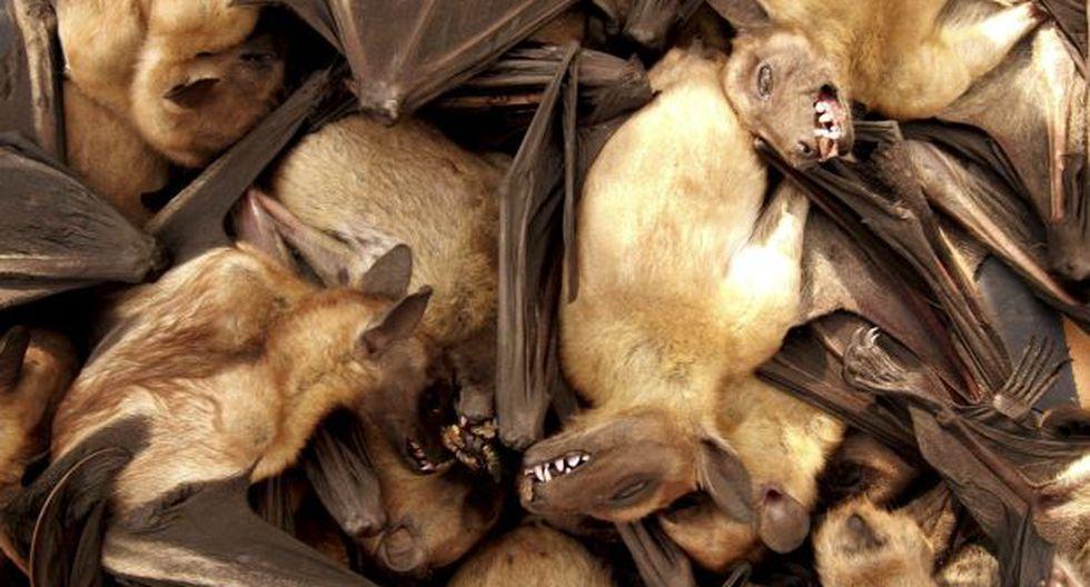 Excremento de murciélago, ¿herramienta para cultivar marihuana?