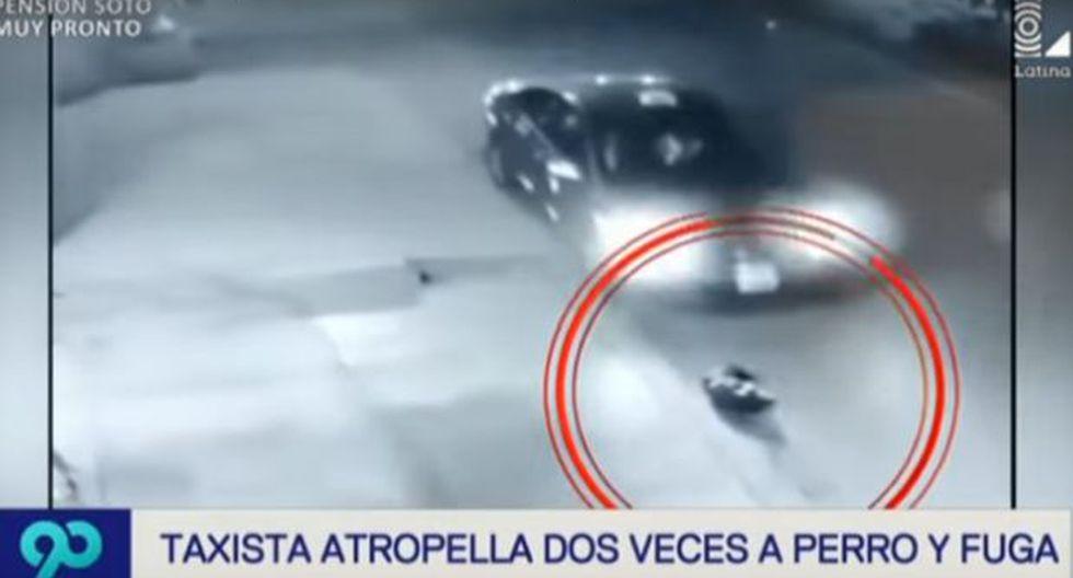 San Juan de Miraflores: taxista atropella hasta 3 veces a perro