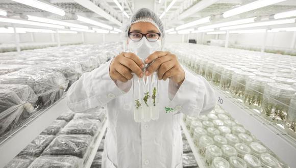 Ley agraria puede ser perjudicial para algunas agroexportadoras. (Foto referencial: Archivo/ GEC)