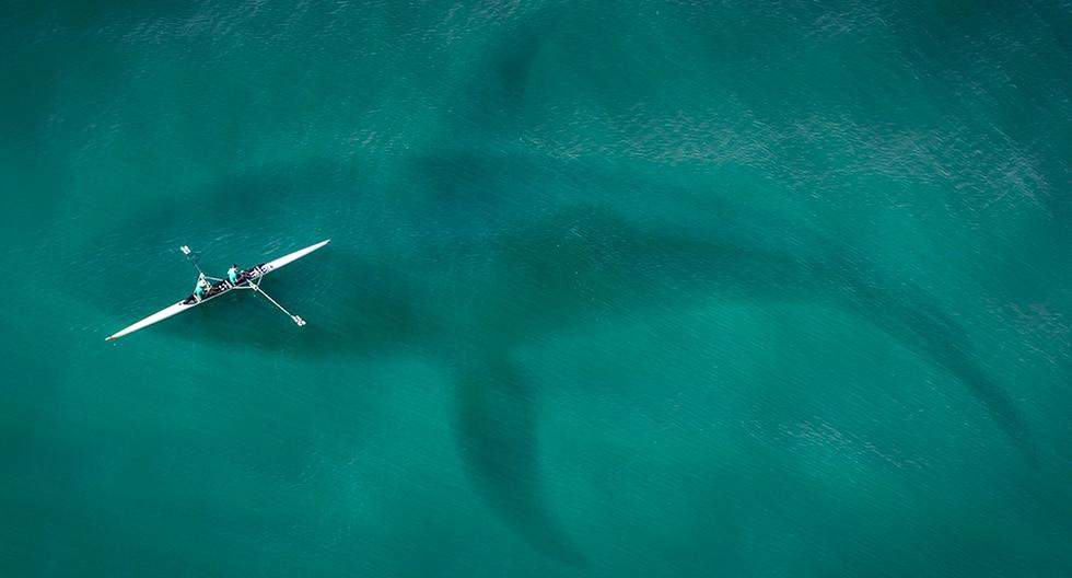 Esta es la historia de un buzo que casi pierde la vida tras ser tragado por una ballena. | Pixabay