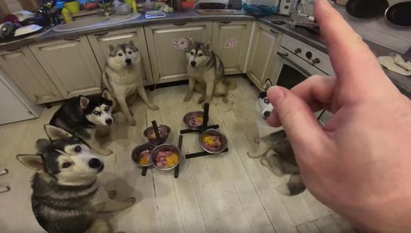 Estos perros no comen mientras no estén todos los platos servidos y su dueño no haya dado la orden. (Foto: Captura YouTube)