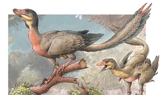 Se cree que el Overoraptor chimentoi portaba plumas como las aves hoy en día.  (Ilustración de GABRIEL LIO)