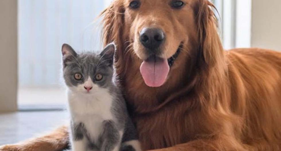 Una singular competencia entre un perro y un gato es la sensación en YouTube. | Foto: Pexels/Referencial