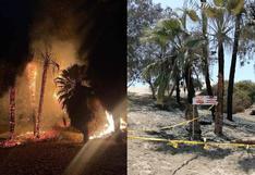 Ica: siete palmeras de la Huacachina fueron incendiadas | VIDEO