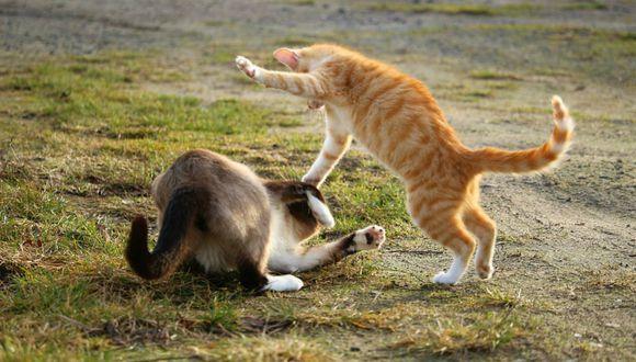 Se viralizó en Facebook el instante en que un gato empuja a otro para cobrar venganza. (Foto: Referencial/Pixabay)