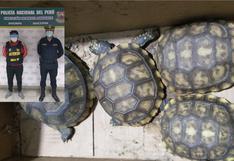 SJM: detienen a hombre que pretendía comercializar ilegalmente especies de fauna silvestre