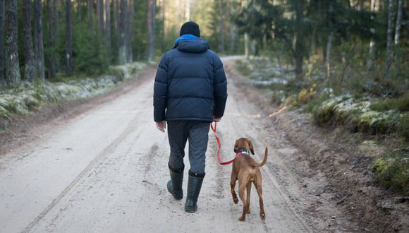 Aunque la casa sufrió grandes daños, Brian Rand está feliz y agradecido con su fiel perro que le salvó la vida. (Foto: Referencial/Pixabay)