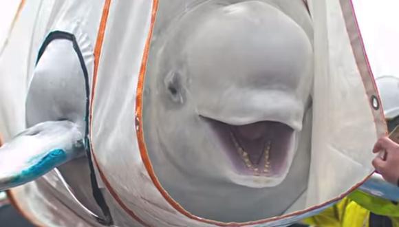 Little Gray y Little White  fueron rescatados tras varios años en cautiverio. El video es muy emotivo. (Foto: Video ABC News/YouTube)