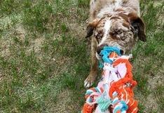 ¿Qué tanto sabes de juguetes para perros?