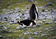 Antártida: ¿cómo florece la vegetación pese a las condiciones extremas?