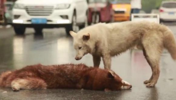 YouTube: un perro llora a can atropellado en pista [VIDEO]