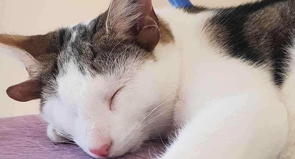 Además de los maltratos a los que fue sometido, el gatito ahora tiene problemas en las articulaciones. (Foto: Instagram @frank_n_kitten)