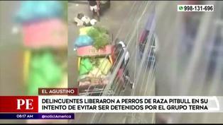 El Agustino: delincuentes liberan a perros pitbull para evitar se detenidos por la Policía