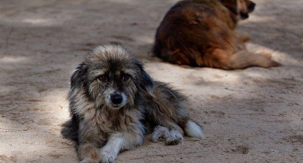 Cada año más de 500.000 perros y gatos son sacrificados en México. (Foto: Pixabay/ Referencial)