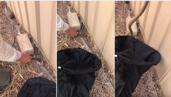 Sin importarle nada, este hombre atrapó al animal para luego expulsarlo de su propiedad. El hecho ocurrió en Australia y el video se publicó en YouTube. (Foto: captura de video)