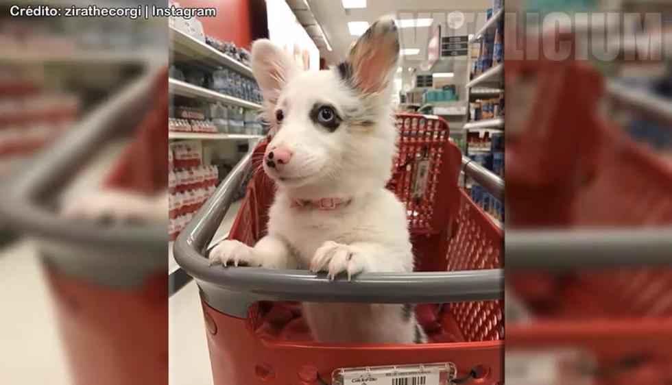 Mira en YouTube cómo es que este perrito disfruta de su primer día en el supermercado. (Foto: Yt)