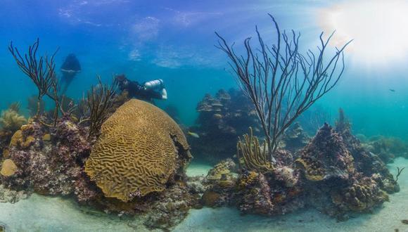 Paisaje de arrecifes del Caribe. Fuente- The Ocean Agency : XL Catlin Seaview Surve