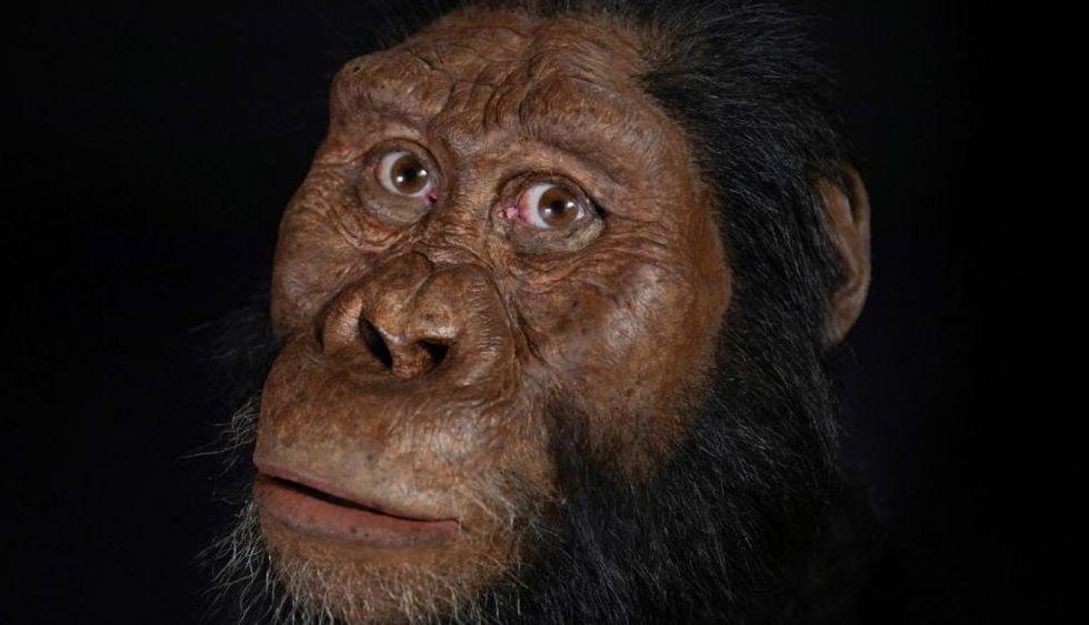 Luego de millones de años de evolución, apareció el género homo, del que proviene el hombre moderno. (Foto: (Foto: EFE/ CMNH/MattCrow)