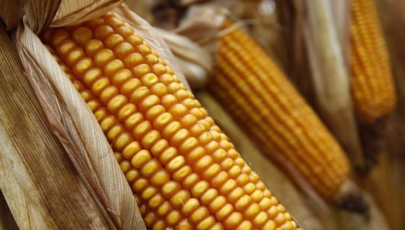 La producción de maíz de EE.UU. caería 30% por cambio climático