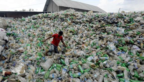 En el 2050 casi todas las aves marinas habrán ingerido plástico