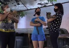 Defensores de animales en Cuba celebran nueva ley de protección