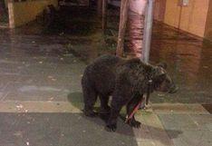 Domador deja un oso atado a un poste para irse a un bar
