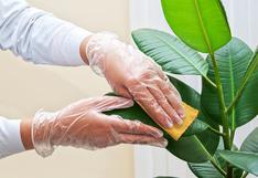 Sigue estos consejos para mantener tus plantas en buen estado | FOTOS