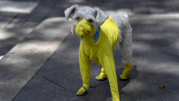 En Reino Unido planean entrenar perros para detectar pacientes con coronavirus. (Foto Referencial: AFP).