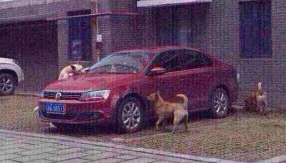 ¡Insólito! Perros se vengan y muerden un auto