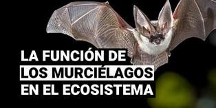 Los murciélagos y su importancia en el equilibrio ecológico del planeta