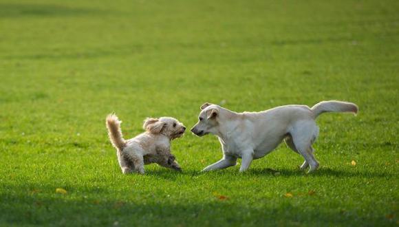 Alquilan perros entre seis y 30 dólares en Japón