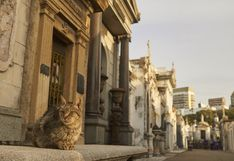Día del Gato: 7 destinos para los amantes de los felinos   FOTOS