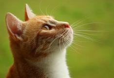 Gato tiene inusual manera de 'pedirle' a su amo que la acaricie y llena de ternura las redes sociales