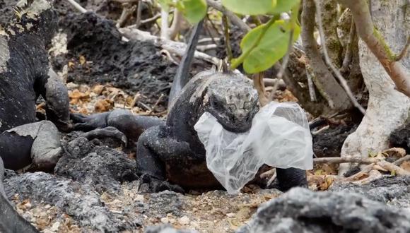 Iguana comiendo una bolsa plástica. Foto: Getty images.