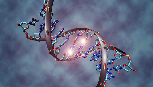 Cuando el ADN sirve como un cable telefónico