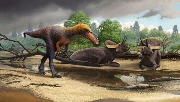 """El nuevo dinosaurio es llamado hazelae Suskityrannus, nombrado por """"coyote"""" en el idioma zuni. Data de hace 92 millones, unos 20 millones de años antes de que el T. rex caminara por la Tierra. (Foto: AP)"""