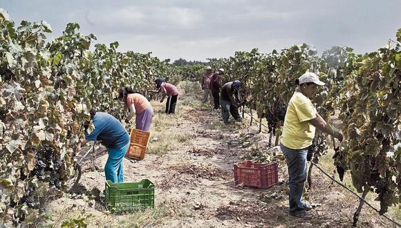 Luego de que el Congreso aprobara derogar la Ley de Promoción Agraria el 8 de diciembre, esta comisión recibió un plazo de 15 días para elaborar una nueva propuesta. (FOTO: KAREN ZARATE / EL COMERCIO)