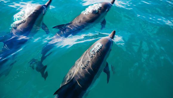 En la pesca de arrastre caen cientos de peces en la llamada «pesca incidental», los delfines pueden ser algunos de ellos. Foto: Pablo Heimplatz.