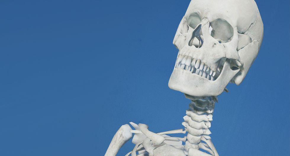 Entérate cómo activar el esqueleto humano en 3D usando Google, al mismo estilo de los animales. (Foto: Google)