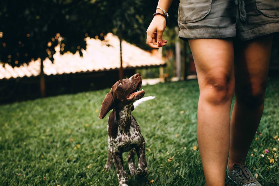 FOTO 1 DE 3 | Los perros pueden haber sido domesticados hace miles de años, pero todavía se consideran parte de un grupo como sus antepasados salvajes. Foto: Pexels. (Desliza a la izquierda para ver más fotos)