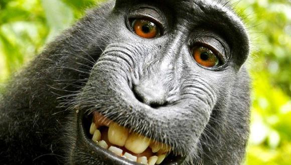 El humano gana el caso de la selfie de un macaco. (Foto: David Slater)