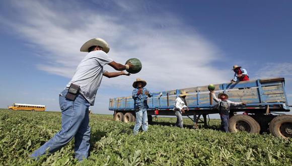 En esta fotografía de archivo del 3 de octubre de 2017, los trabajadores migrantes pasan sandía recién recolectada por una línea para ser cargada en un remolque de productos agrícolas en el campo de sandías de Mandujano Brothers Produce's, en Coyanosa, Texas. (Jacob Ford / Odessa American, archivo AP),