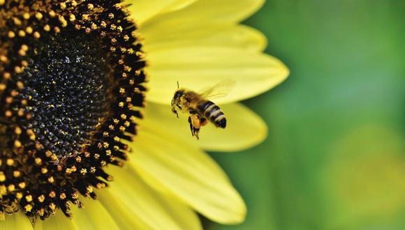 La velocidad a la que están desapareciendo los insectos es ocho veces mayor que la de los mamíferos, aves y reptiles. (Foto: Referencial/Pixabay)