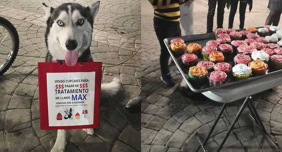 Muere Max, el perrito que vendía cupcakes para pagar su tratamiento contra el cáncer. (Facebook | Yoselin Macias)