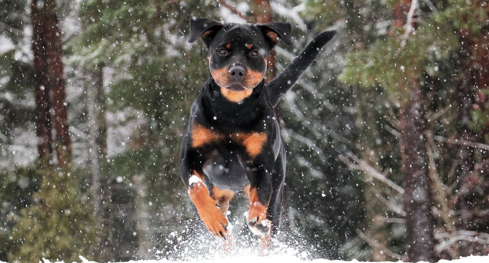 Un valiente perro fue al rescate de su dueño, al ver que este se estaba  ahogando. (Foto: Pixabay / referencial)