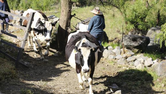El Minagri busca impulsar la producción de 1.75 millones de ganaderos. (Foto: GEC)