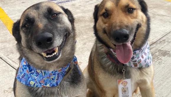 Dos perros adoptados son la principal atracción de un restaurante en Toluca, México. | Crédito: Los Rancheros del Sur / Facebook.