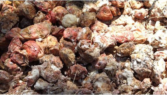 Tocosh es conocido también como la penicilina natural peruana. Se trata de las papas fermentadas por varios meses que generan propiedades nutritivas y curativas que combaten la gastritis y las úlceras.